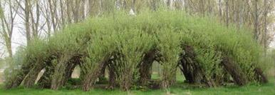 Vrbové dřevo